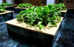 Indoor green plants stock photo