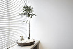 Indoor home environment where potted plants Stock Photos
