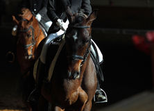 Indoor horse riding area at a riding school Royalty Free Stock Image
