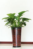 Indoor ornamental plants Stock Images
