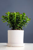 Indoor plant Stock Photos