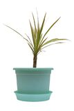 Indoor plant. Indoor plant in a pot on a white background Stock Images