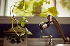 Indoor Plant asking for little bit of water. (drop Royalty Free Stock Image