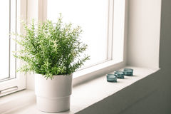 Indoor plant in a bathroom window Royalty Free Stock Photos