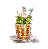 Indoor plant with money bills. Decorative tree with cash notes on branches on a white background Royalty Free Stock Images