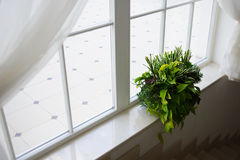 Indoor plant pot on windowsill with windowlight. Royalty Free Stock Photos