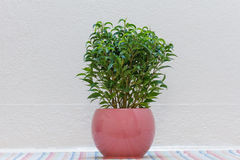 Indoor Plant Stock Images