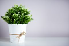 Indoor plant on the table and copy space. Indoor plant in pot on the table and copy space Stock Photo