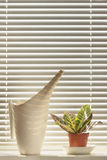Indoor plant and watering can on the windowsill. On the background of blinds royalty free stock image
