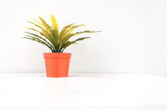 Indoor plant on wooden table and white background. Stock Photos