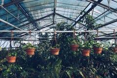 Indoor Plants chart metaphor. Stock Images