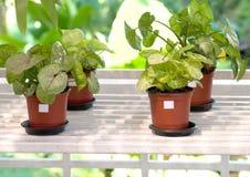 Indoor plants in flowerpots Stock Images