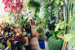 Indoor plants Royalty Free Stock Images