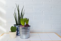 Ndoor plants in the house. background with space royalty free stock photography