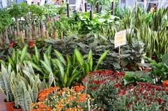 Indoor Plants Stock Photos