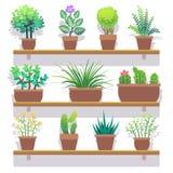 Indoor plants in pots flat icons set Stock Photos