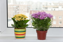 Indoor plants are on the window Royalty Free Stock Images