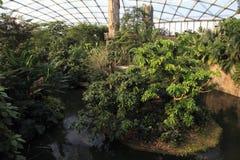 Indoor Rainforest Stock Photo