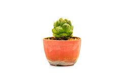 Indoor spiked cactus. Small spiked cactus in a cray pot Stock Photo