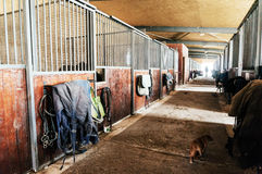 Indoor stable with cat royalty free stock images