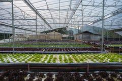 Indoor vegetable garden Stock Images