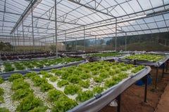 Indoor vegetable garden Stock Photography