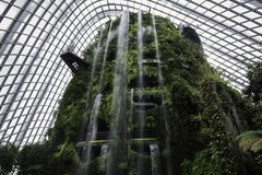 Indoor Waterfall, Cloud Forest Dome, Garden by the bay, Singapor. Indoor Waterfall in the Cloud Forest Dome at Garden by the bay, Singapore Royalty Free Stock Photography