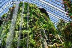Indoor waterfall in Cloud Forest Dome at Gardens by the Bay, Singapore, Asia