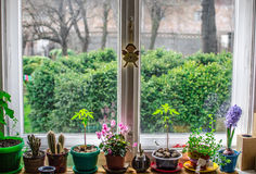 Indoor window flowers. Various types of flowers by the window Stock Photos