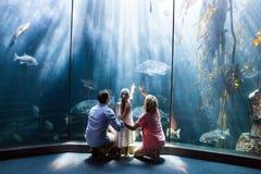 Indossi il punto di vista della famiglia che esamina il carro armato di pesce Fotografia Stock
