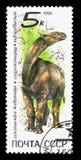 Indricotherium, serie prehistórico de los animales, circa 1990 stock de ilustración