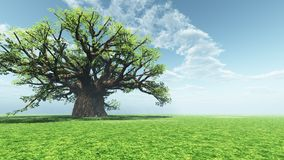 Indrukwekkende baobab Stock Foto's