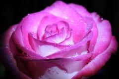 Indrukwekkende bloem met daling van water in macromening Stock Fotografie