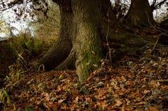 Indrukwekkende wortels van een boom Royalty-vrije Stock Afbeelding