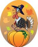 Induk_pumpkin Immagine Stock