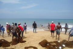 INDURUWA, SRI LANKA - 26 APRILE 2013: I pescatori dello Sri Lanka tirano la grande rete in Induruwa, Sri Lanka La pesca è un'occu Immagine Stock