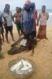INDURUWA, SRI LANKA - 26 APRILE 2013: I pescatori dello Sri Lanka tirano la grande rete in Induruwa, Sri Lanka La pesca è un'occu Immagini Stock