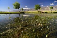 Indusrivier die door vlaktes in Ladakh, India vloeien, royalty-vrije stock fotografie