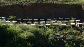 Industriële Bijenkorven van Bijen stock footage