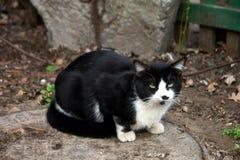 Industriële Cat Walking bij de verlaten Installatie stock foto's