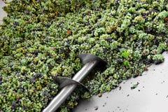 Industriële druivenverwerking Stock Afbeelding
