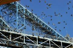 Industriële kraan en vliegende vogels Stock Foto
