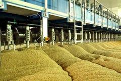 Industriële productie van mout Een reusachtig vat stock afbeeldingen