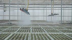 Industriële serres groot in grootte die het hoogste automatische water geven gebruiken stock videobeelden
