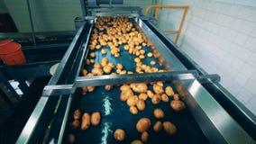 Industriële vervoerder en aardappels die zich langs het bewegen stock video