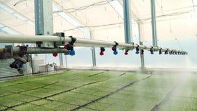 Industri?le Landbouw Rijen die van installaties binnen grote industriële serre kweken stock videobeelden