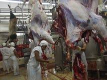Industria alimentare Immagine Stock Libera da Diritti