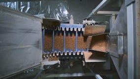Industria alimentare La macchina automatica speciale versa sulla stessa porzione di grano saraceno stock footage