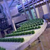 Industria alimentaria congelada Fotos de archivo libres de regalías