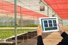 Industria astuta 4 di Iot 0 concetti di agricoltura, agronomo industriale, agricoltore che utilizza tecnologia di intelligenza ar Immagine Stock
